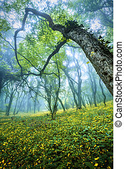 Mysterious forest in fog with green leaves, yellow flowers and b