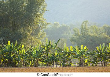 Banana and bamboo trees landscape in the Mai Chau village,...