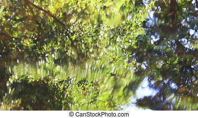 forest reflection in water after rain natural background -...