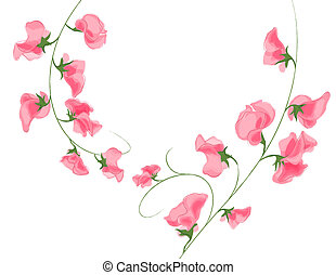 pink flower - illustration drawing of pink flower in a white...