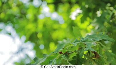 Sun beams and green leaves close up - Sun beams and green...