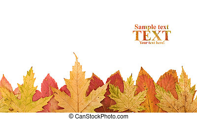 Autumn leaves footer design element - isolated
