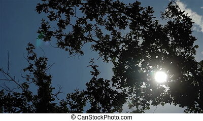 Green leaves with sun ray blue sky