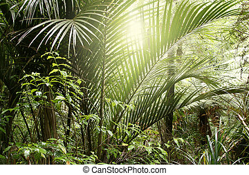 Jungle sunlight - Sunlight in tropical jungle forest