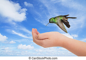Green hummingbird hovering over a young hand against blue...