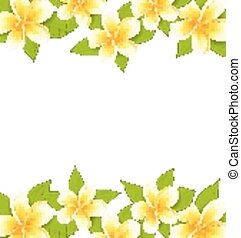 Decoration frame made in frangipani (plumeria), ornament with exotic flowers on white background