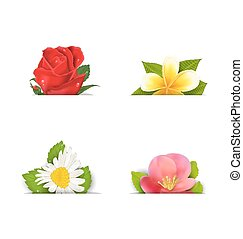 Beautiful flowers rose, quince; frangipani, copy space for...