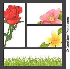 Invitation brochure with beautiful flowers (rose, quince; frangipani) and grass, template card layout, copy space for your text