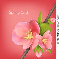 Spring greeting card with branch of Japanese Quince...