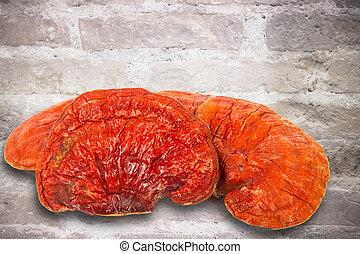 Lingzhi Mushroom Ganoderma Lucidum Isolated on brick floor