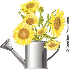 Gardening|sunflowers - Sunflowers in a water can
