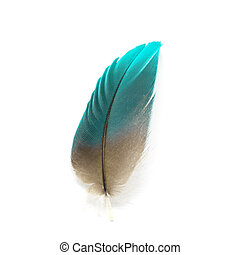 bird feather isolated - Colorful bird feather isolated on...