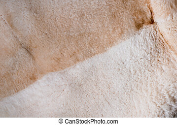 faux fur - the texture of the bright colored faux fur...