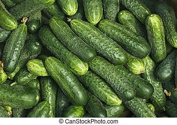 Big pile of fresh green cucumbers
