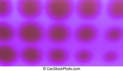 Abstract Purple Circles.