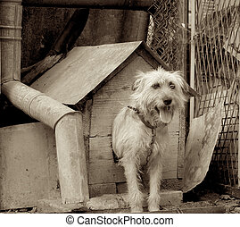 Shaggy Dog - Pretty Shaggy Dog on Chain in Booth among Trash...
