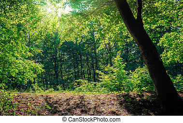 landscape in forest with an emphasis on the tree standing at...