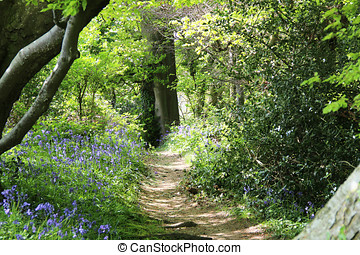 Through the Bluebells