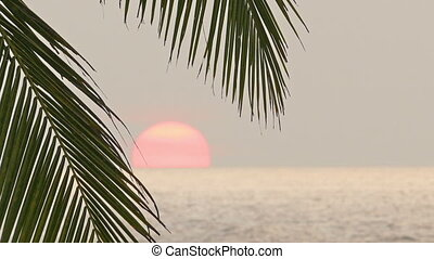 beautiful sea sunset and palm leaf on foreground