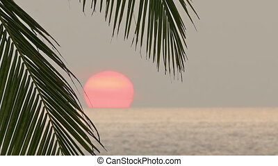 beautiful sea sunset and palm leaf - timelapse