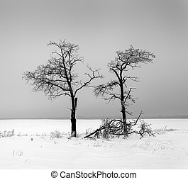 Winter landscape with lonely trees