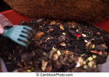 Composting - Worms and food waste in a composting box