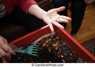 Composting - Woman hand showing worms eggs from her...