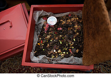 Composting - A composting box full of food waste and worms.