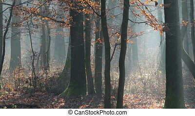 Forest at the autumn time