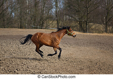 Running horse on the meadow at spring time