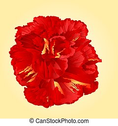 Tropical flower red hibiscus