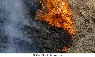 Fire in field - Burning old grass on spring field