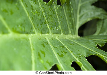 A Green leaf with water drops on it standing in the garden