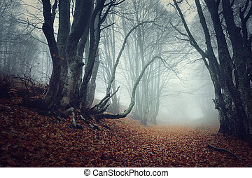 Mysterious dark autumn forest in fog with orange leaves,...