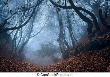 Mysterious dark autumn forest in blue fog with orange leaves, tr