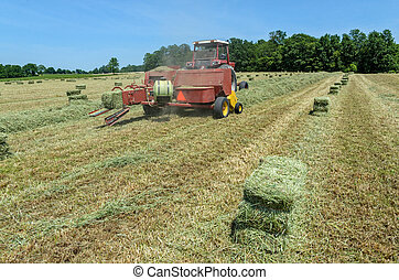 Baling Hay - Tractor in Field Picking Up Hay to Form into...