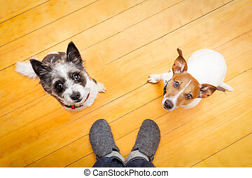 two dogs and ower at home - two dogs begging looking up to...