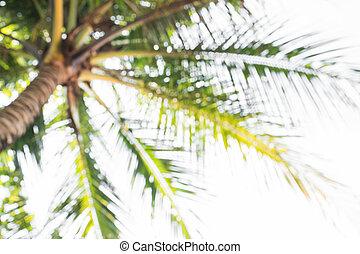 Abstract background of blurred coconut trees, depth of focus...