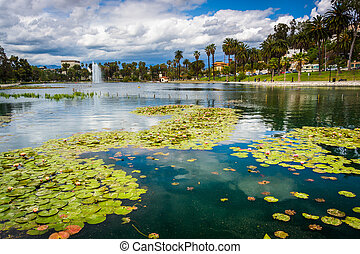 Lily pads in Echo Park Lake, in Los Angeles, California.