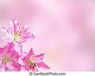 Pink lilly flower - Pink lilly flower on pink background