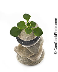 Life - balanced stone tower with green plant