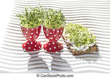 fresh cress geow in eg cup and whole corn bread (lepidium...