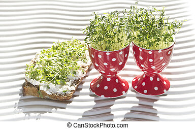 fresh cress geow in eg cup and whole corn bread lepidium...