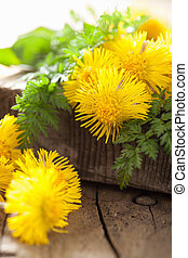coltsfoot flowers spring herbs