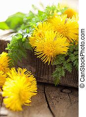 coltsfoot flowers spring herbs