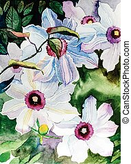 watercolor flowers - white clematis - watercolor...