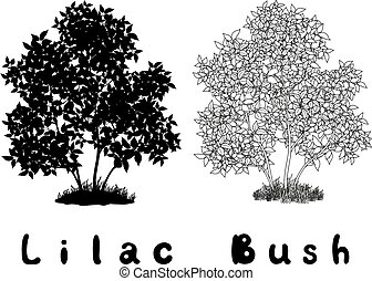 Lilac Bush Contours, Silhouette and Inscriptions - Lilac...
