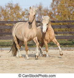 Two amazing stallions playing together - Two amazing...
