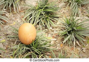 eggs on a background of green grass