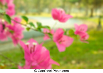 Blur natural and bougainvillea background.